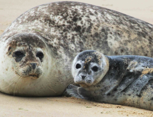 Easy booking e-ticket service to see the seals! [update]