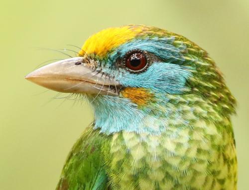 Bird Photography – new website
