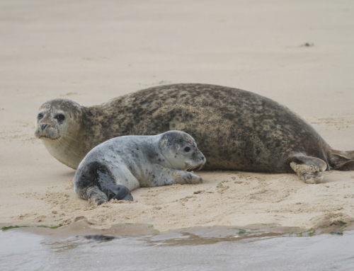 Seal pups at the Point!
